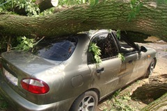 Упало дерево на крышу